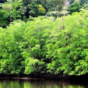 Mangrove tour (2)