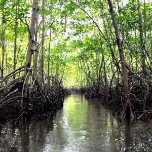 Mangrove tour (3)